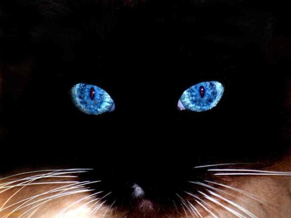 Fosforlu Kedi Gözleri